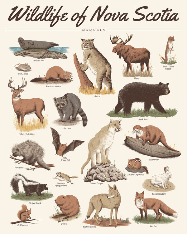 Wildlife of Nova Scotia - Mammals 16x20 Print
