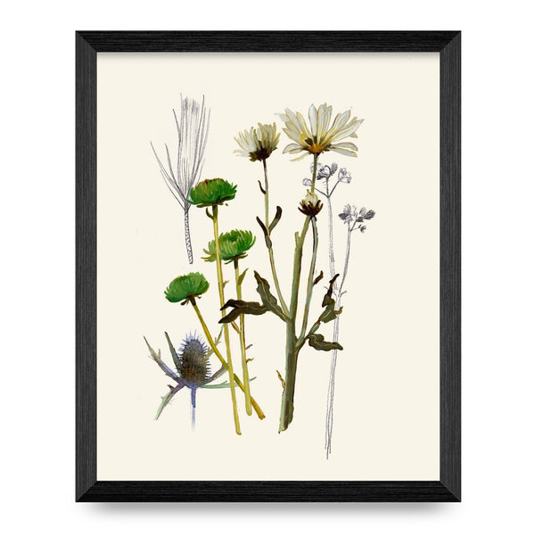 Daisies, Pine & Sea Holly 8x10 Print