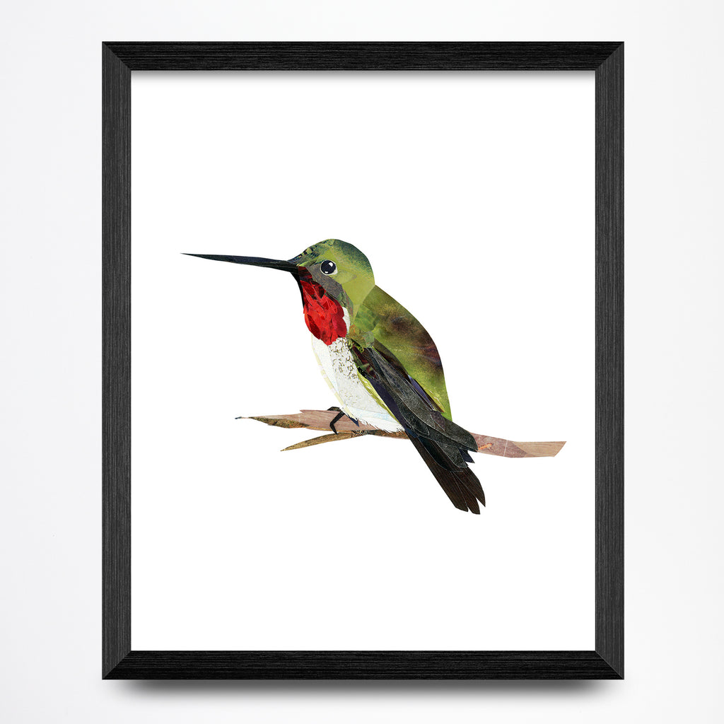Hummingbird Collage 8.5x11 Print