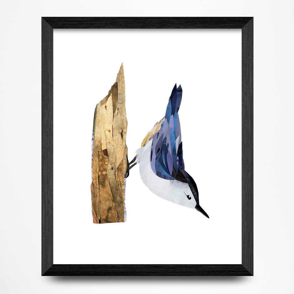 Nuthatch Collage 8.5x11 Print