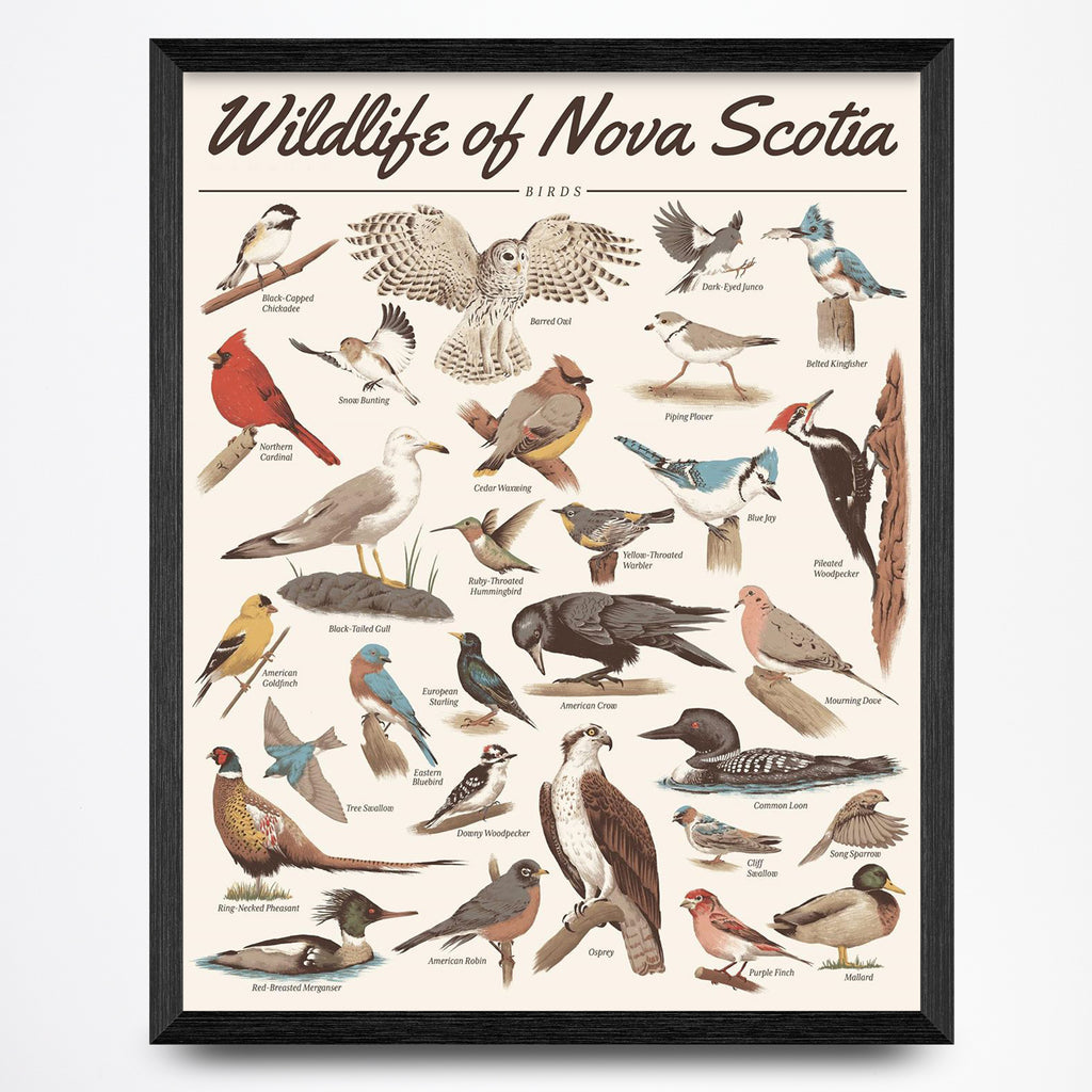Wildlife of Nova Scotia - Birds Print