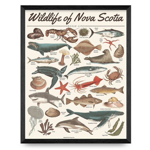 Wildlife of Nova Scotia - Ocean Life 16x20 Print