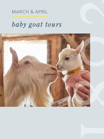 Baby Goat Tours - April 24, 2021
