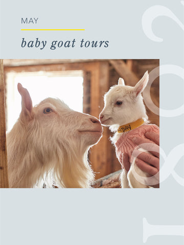Baby Goat Tour - May 1, 2021