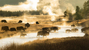 FIREHOLE CROSSING