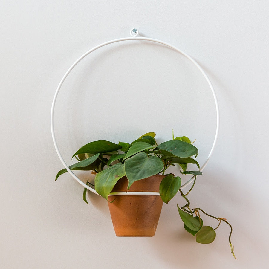 "Circle Hanging Planter 10"" - White"