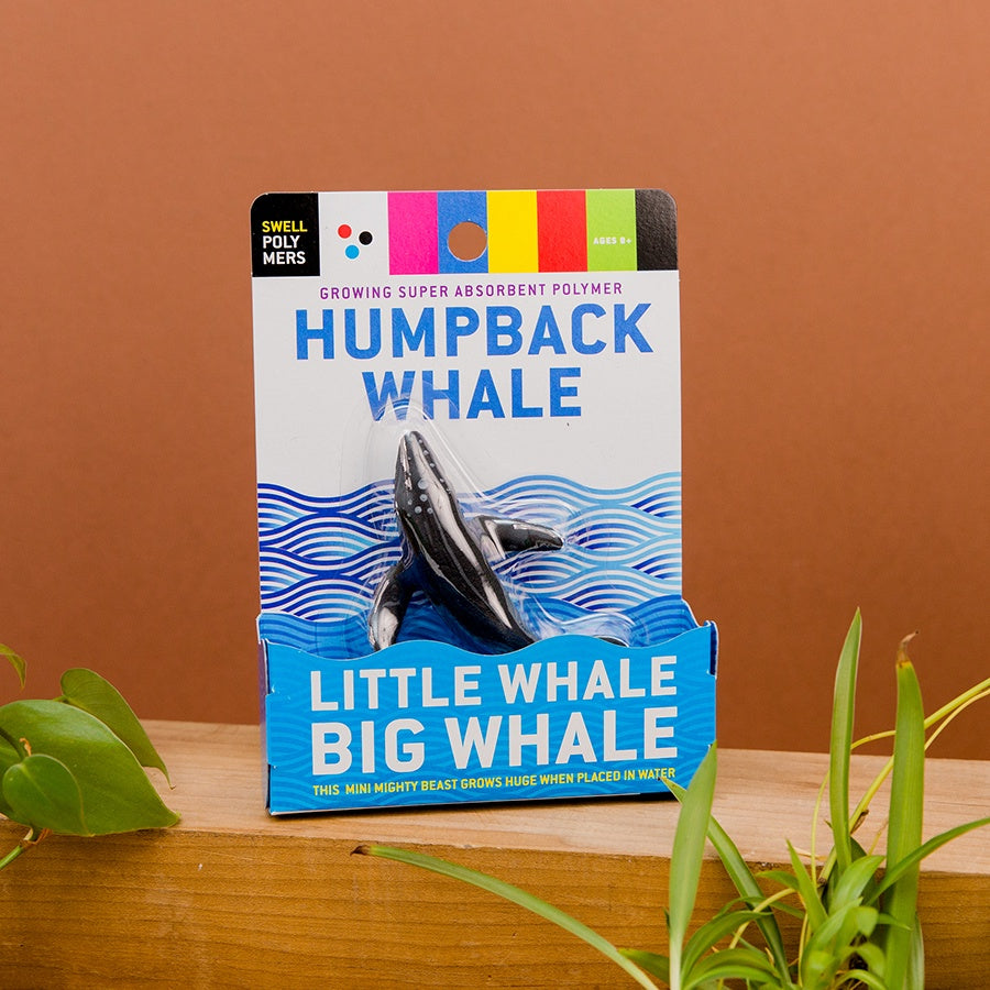 Little Whale, Big Whale: Humpback
