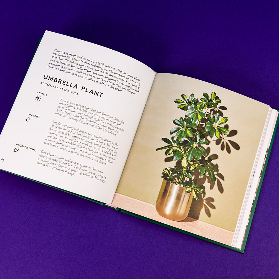 The Little Book of Houseplants