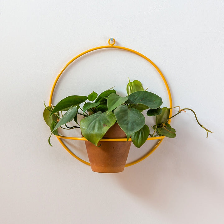 Circle Wall Planter - Yellow