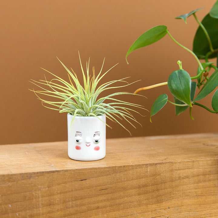 Mini Pal Planter with Airplant, Porcelain - Gerry