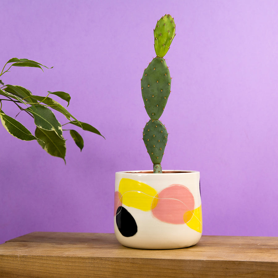 "Quixotic Planter 4"" - Pink Lemonade"