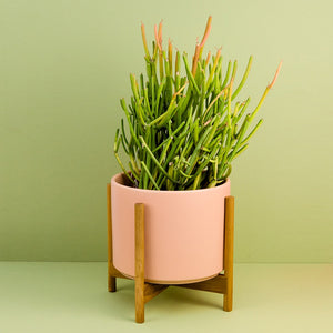 The Eight - Peachy Cotta Ceramic Cylinder with Teak Stand
