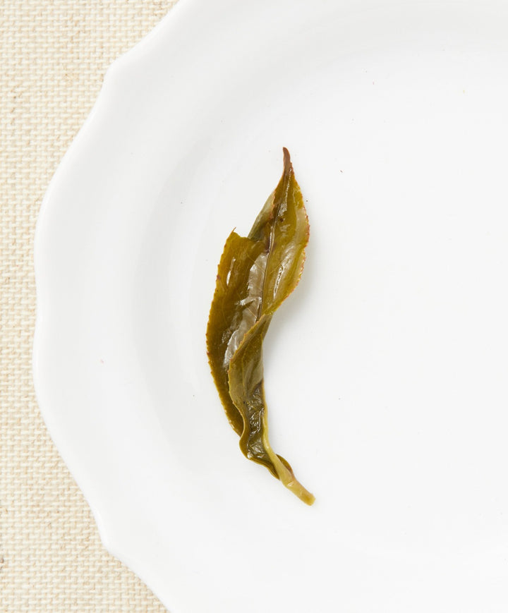 baozhong oolong tea open leaf