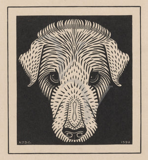 Dog Face. Antique woodcut. Fine art print