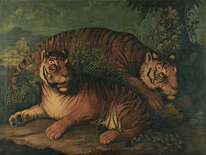 Bengal Tigers. Antique painting. Fine art print