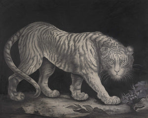 Antique black and white artwork of a tiger. Fine art print