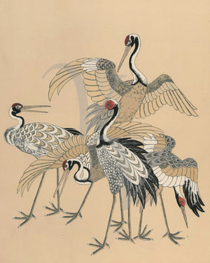 Five cranes Japanese birds. Fine art print