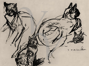 Ink drawing of cats by Theophile Steinlen. Fine art print