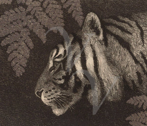 Tiger with fern fine art print