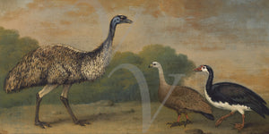 Georgian painting with an emu and goose. Fine Art Print