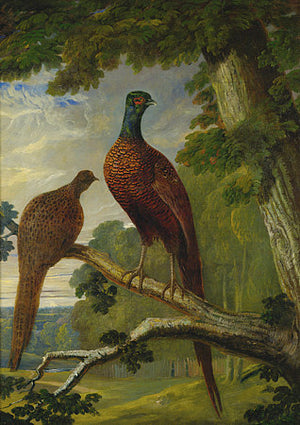 Two pheasants Victorian painting. Fine art print