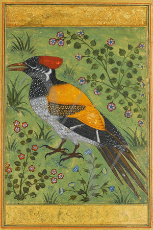 Mughal painting of a Woodpecker. Indian fine art print