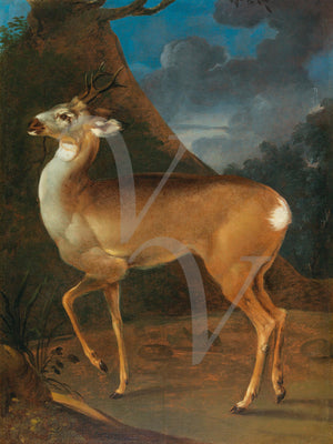 Deer in a landscape Georgian painting. Fine art print