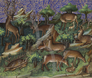 Medieval deer and stags in a forest. Fine art print