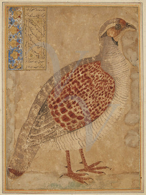 Partridge bird. Antique Persian painting. Iran. Fine art print