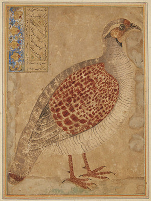 Partridge bird. Antique Persian painting. Fine art print