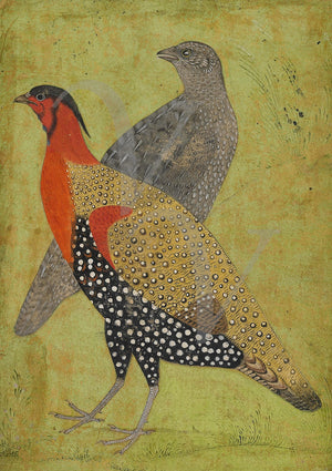 Indian Mughal painting of two pheasants. Fine art print
