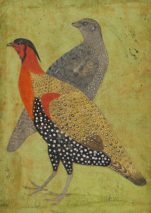 Pheasants. Mughal painting. Indian birds. Fine art print
