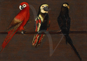 Exotic bird painting. Parrots. Fine art print