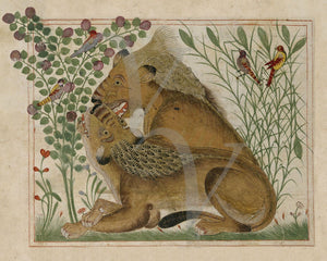 Persian Lions. Antique bestiary painting. Fine art print