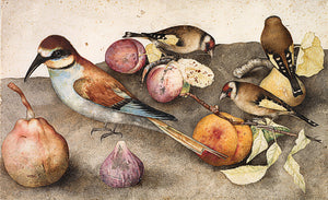 Birds and Fruit. Antique Italian still life painting. Fine art print
