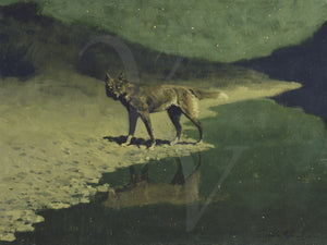 Wolf by moonlight antique painting. Fine art print