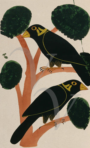 Two crows. Indian, Kalighat, antique bird painting. Fine art print