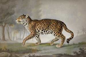 Panther. Antique Painting. Fine Art Print
