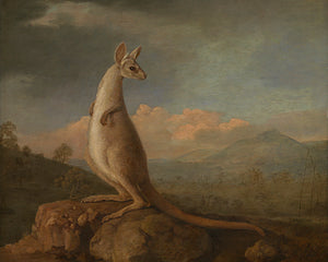 Antique kangaroo painting. Fine art print