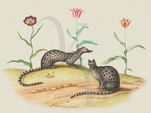 Spotted martens with tulips. Vintage animal painting. Fine art print