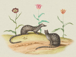 Spotted martens with tulips. Antique natural history painting. Fine art print
