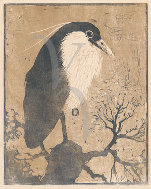 Night Heron. Antique bird woodcut. Fine art print
