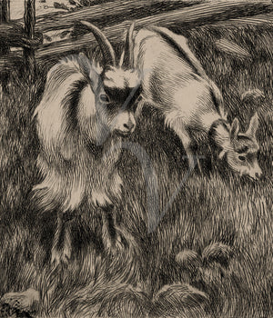 Vintage goat drawing. Farm animals. Fine art print
