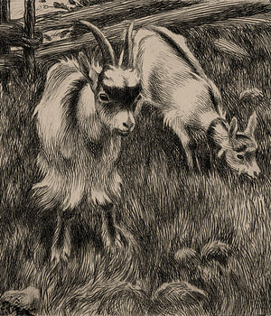 Antique drawing of two goats. Fine art print