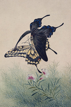 Korean butterfly painting. Fine art print