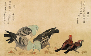 Doves, Pigeons and Sparrows. Japanese woodblock artwork. Fine art print