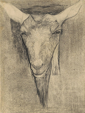 Goat Head antique illustration. Fine art print