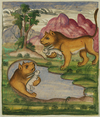 The evil lion sees his reflection. Painting from a Persian book of fables. Fine art print