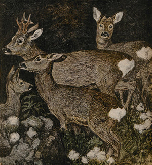 Forest deer vintage illustration. Fine art print
