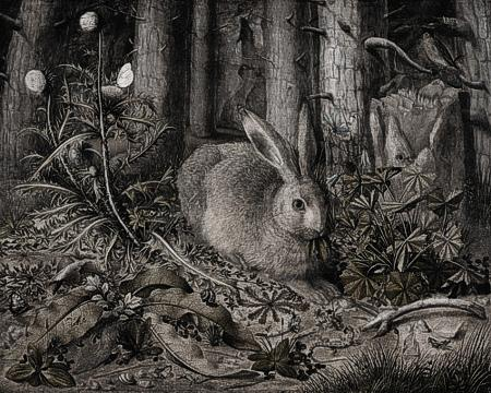A Hare in the Forest - Venus Art Prints